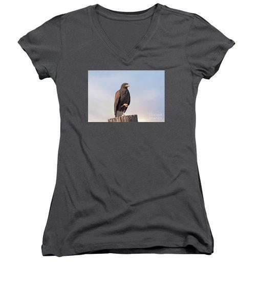 Harris Hawk - Birds Women's V-Neck T-Shirt (Junior Cut) by Anne Rodkin