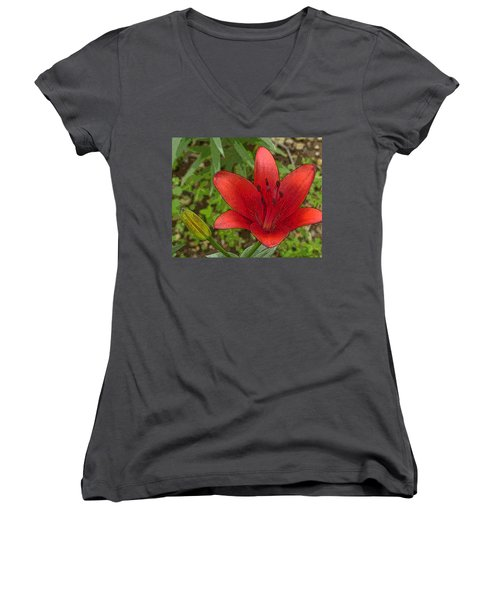 Hazelle's Red Lily Women's V-Neck (Athletic Fit)
