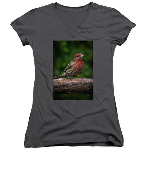 House Finch Women's V-Neck T-Shirt