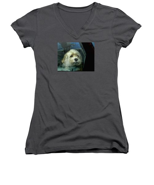 How Much Is That Doggie In The Window Women's V-Neck T-Shirt