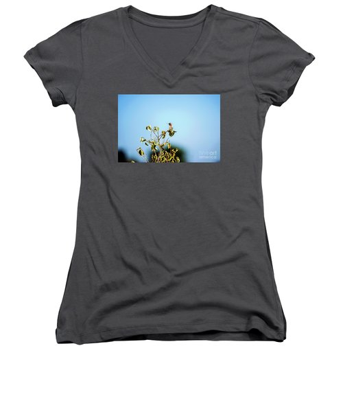 Women's V-Neck T-Shirt (Junior Cut) featuring the photograph Humming Bird On A Branch by Micah May
