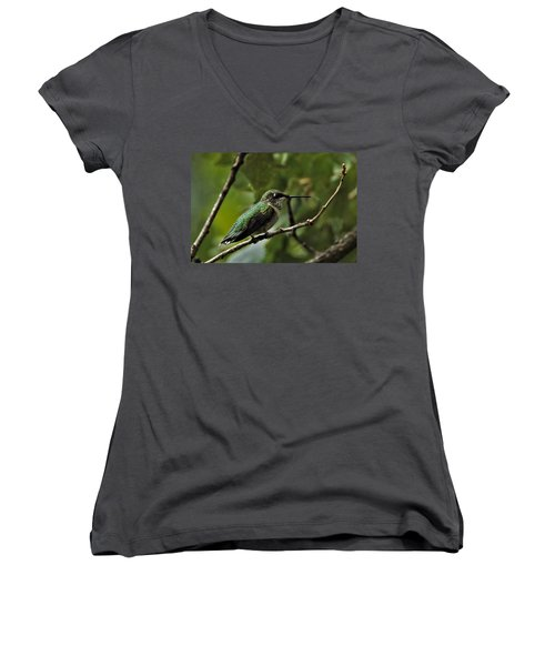 Hummingbird On Branch Women's V-Neck