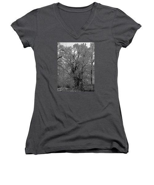 Iced Tree Women's V-Neck (Athletic Fit)
