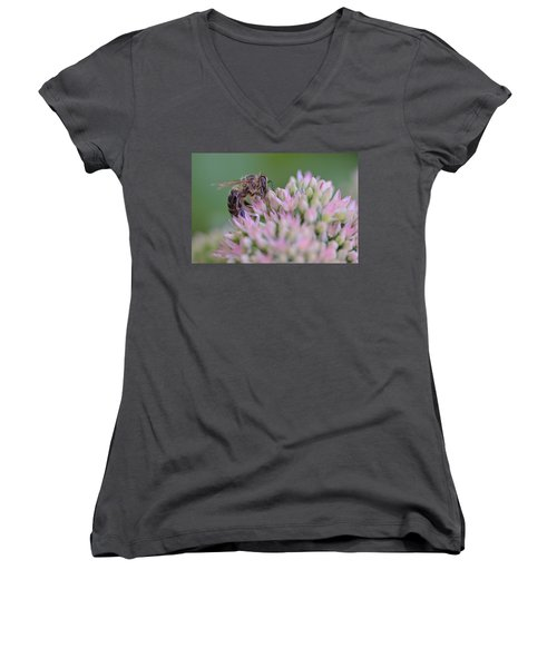 In Search Of Nectar Women's V-Neck T-Shirt (Junior Cut) by Janet Rockburn