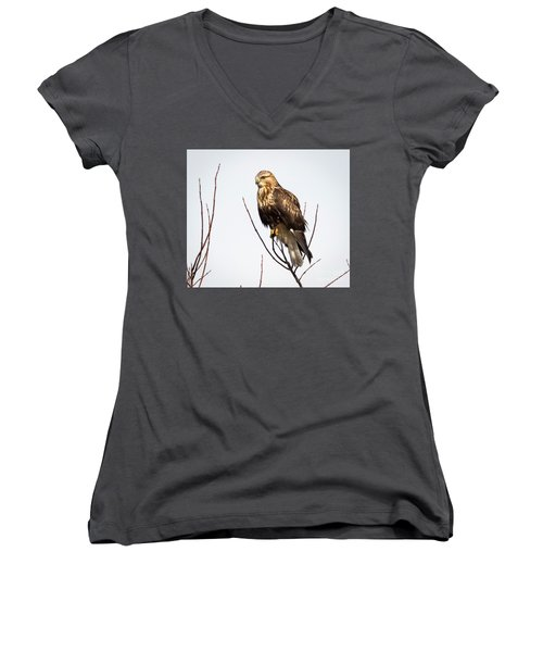Juvenile Rough-legged Hawk  Women's V-Neck