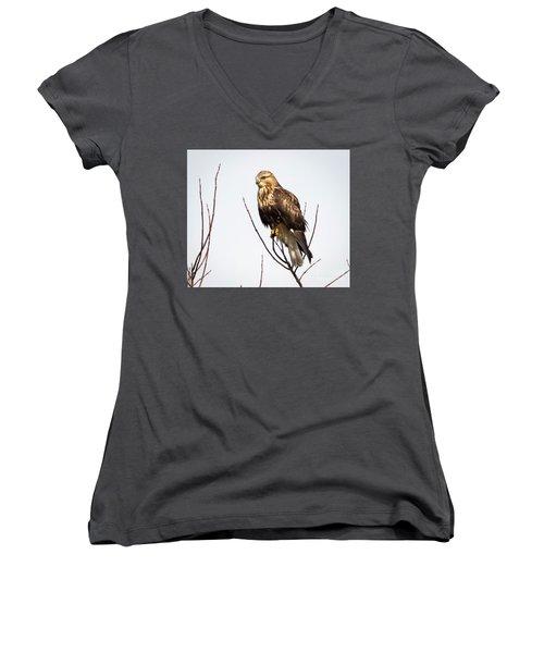 Juvenile Rough-legged Hawk  Women's V-Neck T-Shirt
