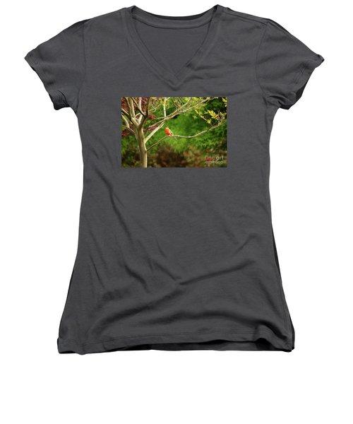 King Parrot Women's V-Neck T-Shirt (Junior Cut) by Cassandra Buckley