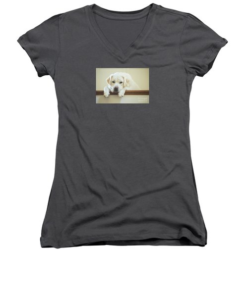 Labrador Retriever On The Stairs Women's V-Neck T-Shirt (Junior Cut) by Diane Diederich