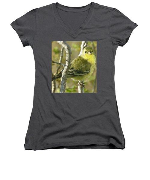 Lesser Goldfinch 1 Women's V-Neck T-Shirt