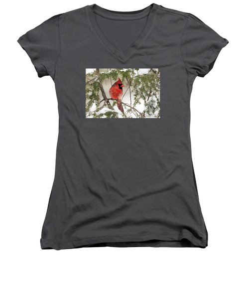 Women's V-Neck T-Shirt (Junior Cut) featuring the photograph Leucistic Northern Cardinal by Everet Regal
