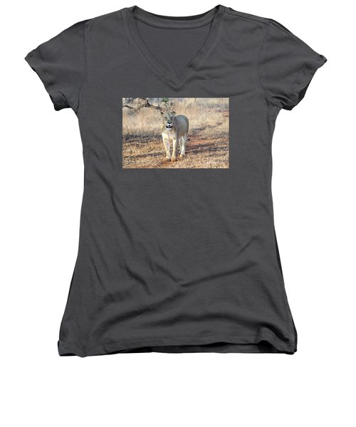 Lioness In Kruger Women's V-Neck T-Shirt (Junior Cut) by Pravine Chester