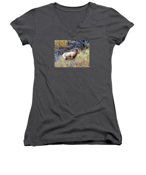 Long Horns Sheep Women's V-Neck T-Shirt (Junior Cut) by Irina Hays