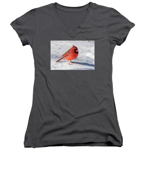 Male Cardinal In Winter Women's V-Neck T-Shirt
