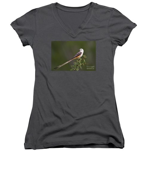 Male Scissor-tail Flycatcher Tyrannus Forficatus Wild Texas Women's V-Neck (Athletic Fit)