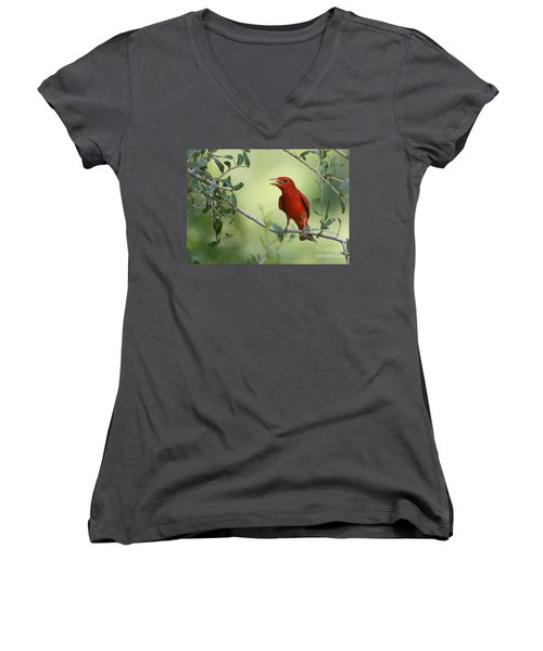 Male Summer Tanager Women's V-Neck T-Shirt (Junior Cut) by Myrna Bradshaw