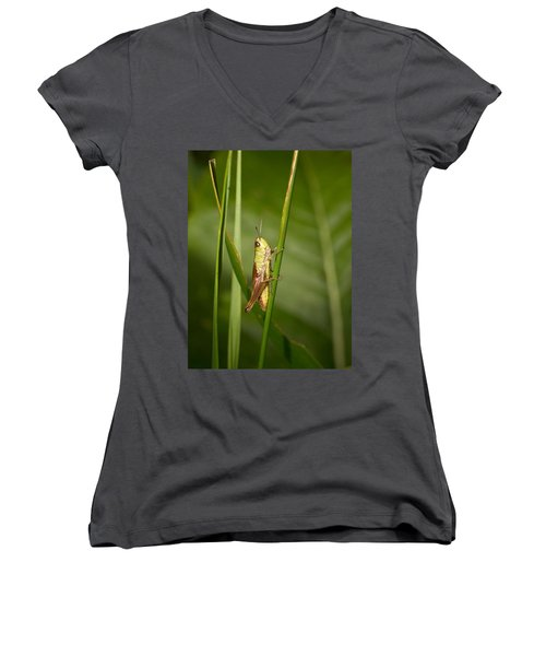 Women's V-Neck T-Shirt (Junior Cut) featuring the photograph Meadow Grasshopper by Jouko Lehto