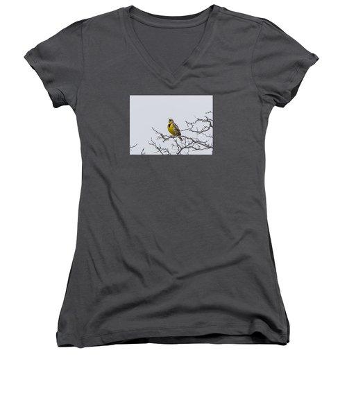 Meadowlark In Tree Women's V-Neck T-Shirt (Junior Cut) by Marc Crumpler