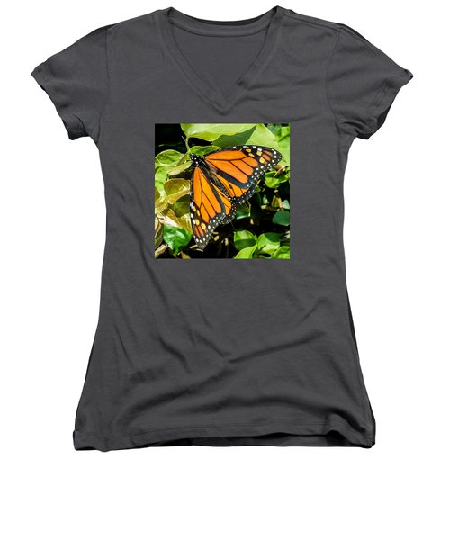 Monarch Women's V-Neck T-Shirt (Junior Cut) by Mark Barclay
