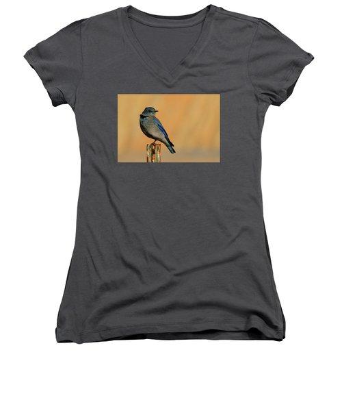 Mountain Bluebird Women's V-Neck T-Shirt (Junior Cut) by Paul Marto