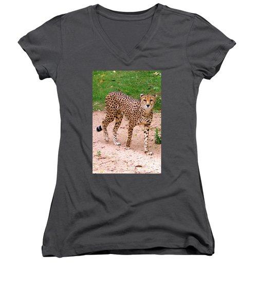 North African Cheetah Women's V-Neck T-Shirt