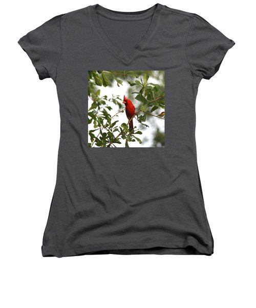 Northern Cardinal - In The Wind Women's V-Neck (Athletic Fit)