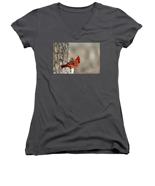 Northern Cardinal On Tree Women's V-Neck