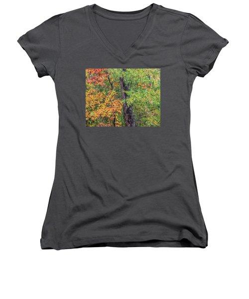 Oak Hickory Woodland Women's V-Neck T-Shirt (Junior Cut) by Tim Fitzharris