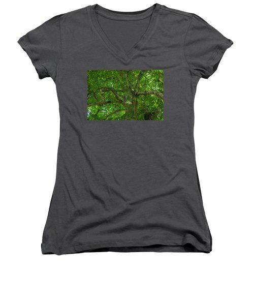 Old Linden Tree. Women's V-Neck T-Shirt (Junior Cut) by Ulrich Burkhalter