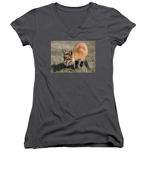 Women's V-Neck T-Shirt (Junior Cut) featuring the photograph On The Prowl by Elvira Butler