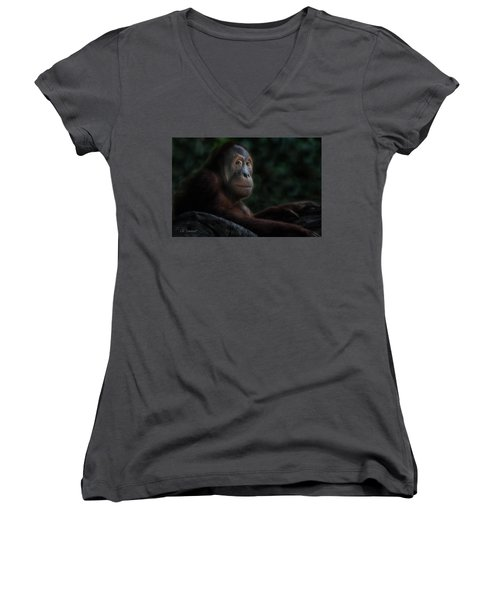 Orangutan Session Women's V-Neck T-Shirt (Junior Cut) by CR  Courson
