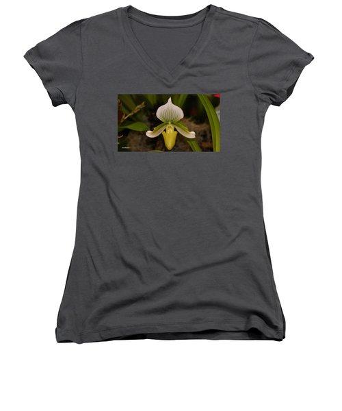 Orchid Flower 42 Women's V-Neck T-Shirt (Junior Cut) by Gary Crockett