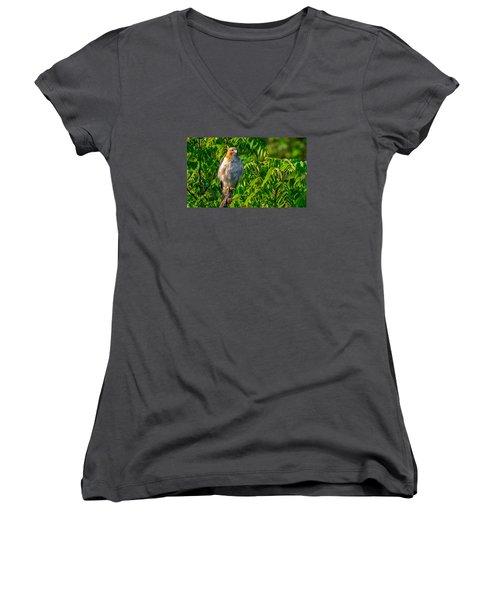 Out On A Limb 3 Women's V-Neck T-Shirt (Junior Cut) by Brian Stevens