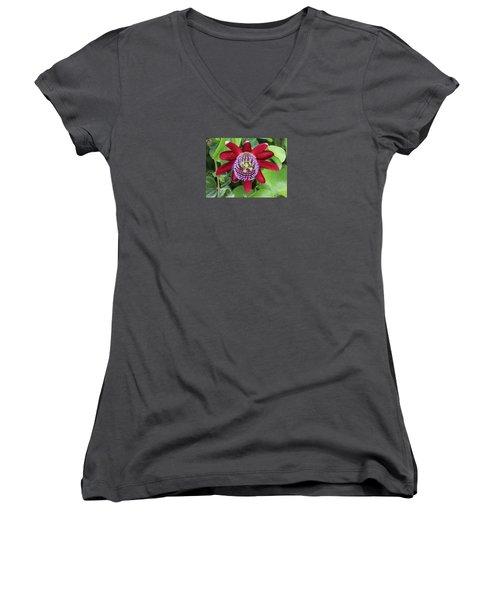 Passiflora Ruby Glow. Passion Flower Women's V-Neck