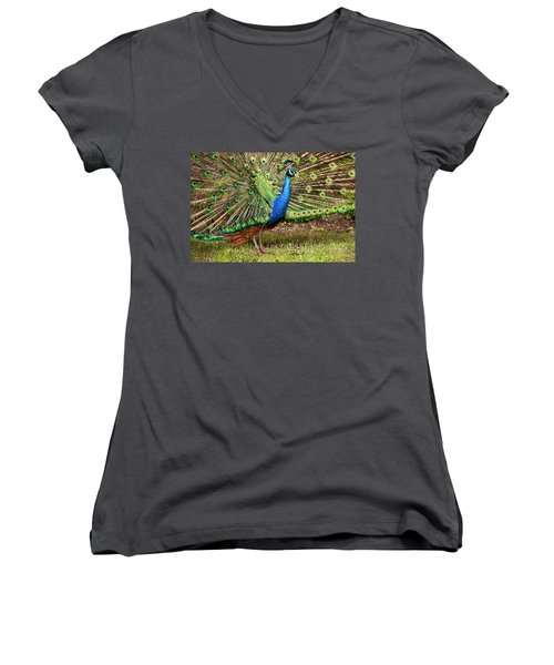 Peacock In Beacon Hill Park Women's V-Neck