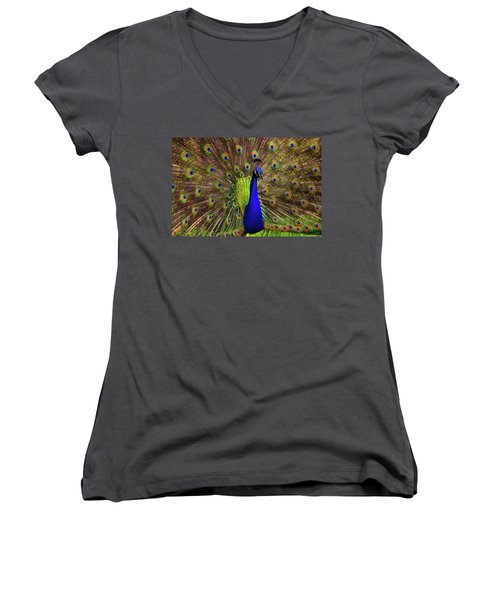 Women's V-Neck T-Shirt (Junior Cut) featuring the photograph Peacock Showing Breeding Plumage In Jupiter, Florida by Justin Kelefas