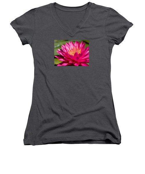 Pink Waterlily Women's V-Neck T-Shirt