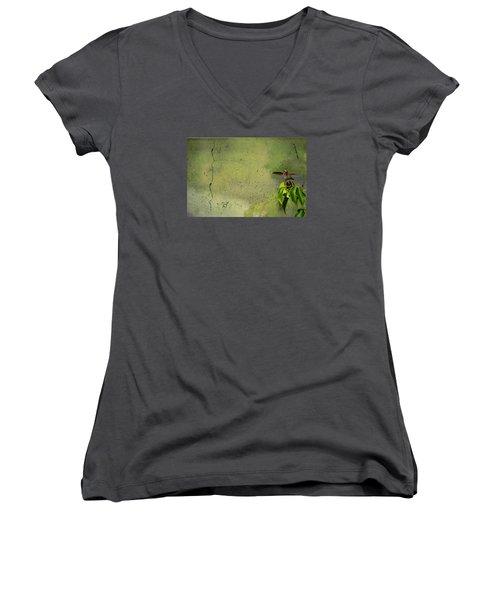 Plate 087 - Hummingbird Grunge Series Women's V-Neck T-Shirt