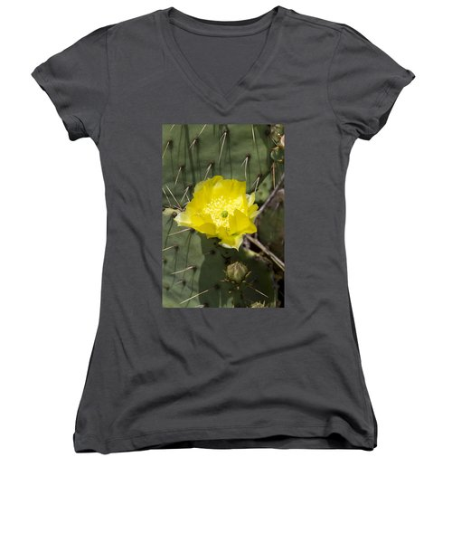 Prickly Pear Cactus Blossom - Opuntia Littoralis Women's V-Neck T-Shirt (Junior Cut) by Kathy Clark