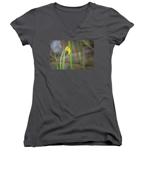 Prothonotary Warbler 5 Women's V-Neck T-Shirt (Junior Cut) by Gary Hall