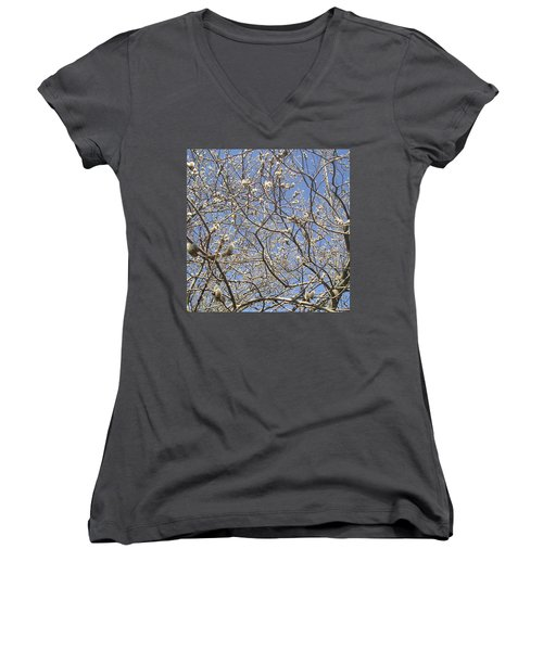 Pussywillows Bursting To Life Women's V-Neck T-Shirt (Junior Cut) by Roger Swezey