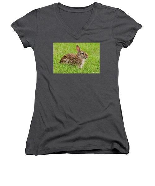 Rabbit In A Grassy Meadow Women's V-Neck