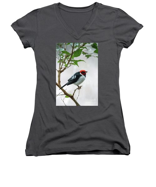 Red Capped Cardinal 2 Women's V-Neck