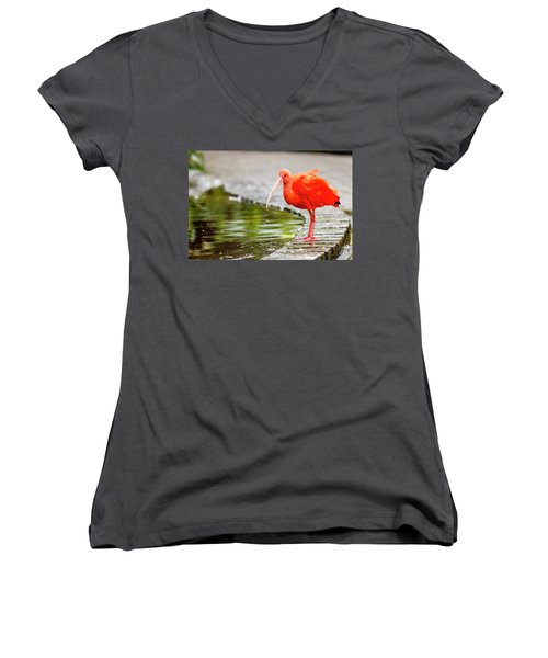 Women's V-Neck T-Shirt (Junior Cut) featuring the photograph Red Ibis by Alexey Stiop