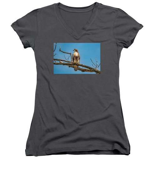 Red Tail Hawk Perched Women's V-Neck (Athletic Fit)