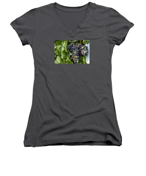 Red Wine Grapes On The Vine Women's V-Neck T-Shirt (Junior Cut) by Teri Virbickis