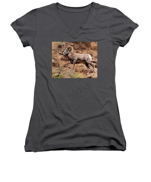Rocky Mt. Big Horn Sheep Women's V-Neck T-Shirt
