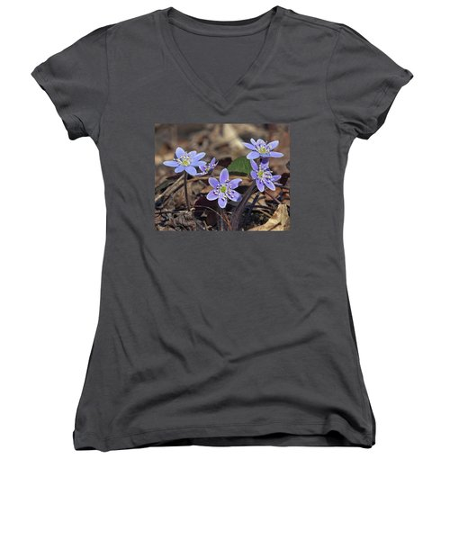 Round-lobed Hepatica Dspf116 Women's V-Neck T-Shirt