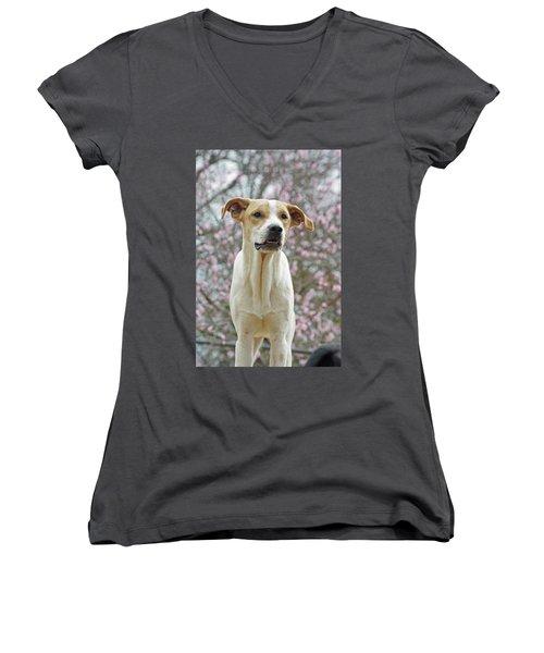Sam In Spring Women's V-Neck T-Shirt