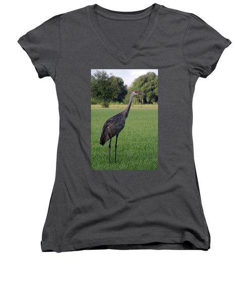 Women's V-Neck T-Shirt (Junior Cut) featuring the photograph Sandhill Crane by Richard Rizzo