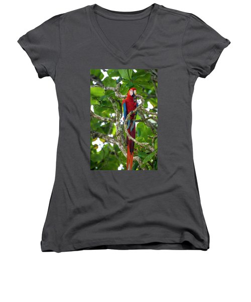Women's V-Neck T-Shirt featuring the photograph Scarlet Macaw by David Morefield